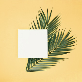 Palm leaves on yellow background with blank sign