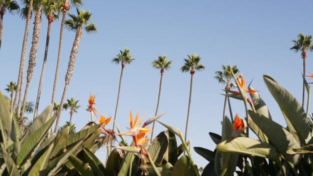 Palm in los angeles, california usa. santa monica and venice beach. strelitzia bird paradise flower