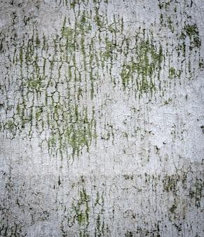 パームリー樹皮テクスチャ背景