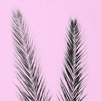 Palm shadow tropical mood on pink background