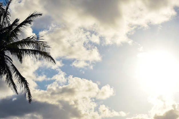 Palm tree against the clouds