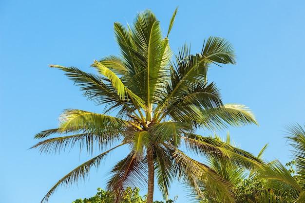青い空を背景にヤシの木 Premium写真