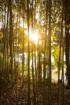 ヤシの木と太陽と竹