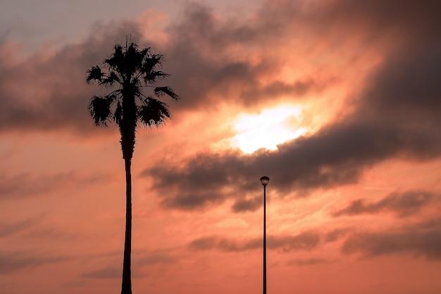 Пальма и уличный фонарь, тяжелые драматические облака и яркое небо. красивый африканский закат над лагуной.