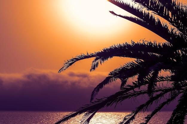 Пальма на пляже на фоне красивого красного заката и яркого солнца