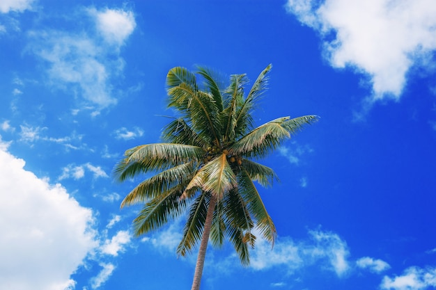 Пальма в море с голубым небом.