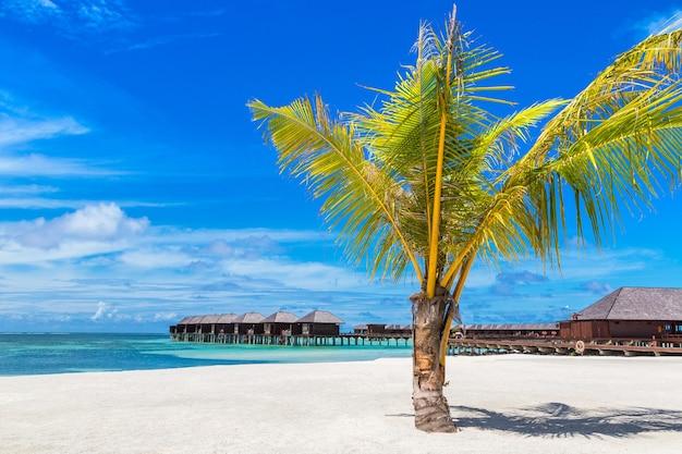 Пальма на тропическом пляже на мальдивах Premium Фотографии