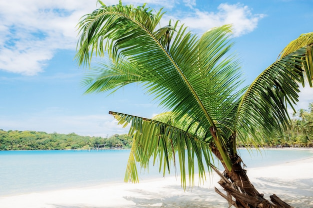 Palm tree on beach in summer with blue sky,
