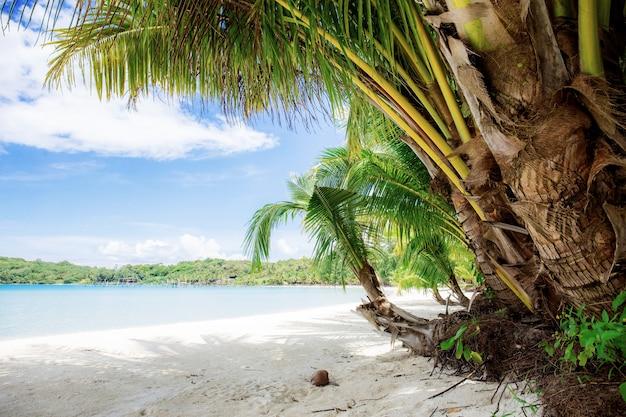 Palm tree on beach.