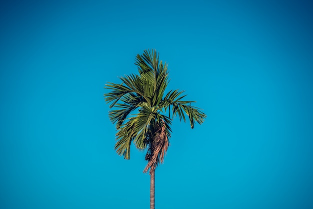 Palm tree on blue sky. vintage filter