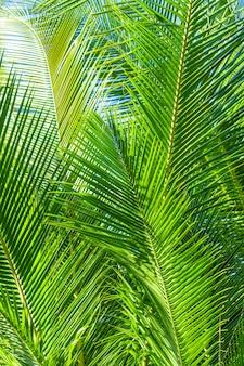Ветка пальмы в тропиках под открытым небом.