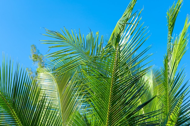 Palm tree branch in the tropics under the open sky.