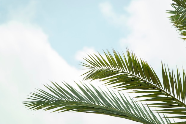 Palm tree branches and leaves foliage under the sky.