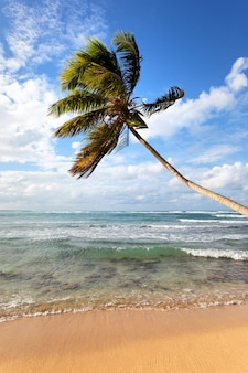 Palm tree on a caribbean beach in summer