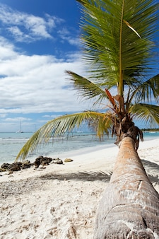 Palm tree in caribbean beach