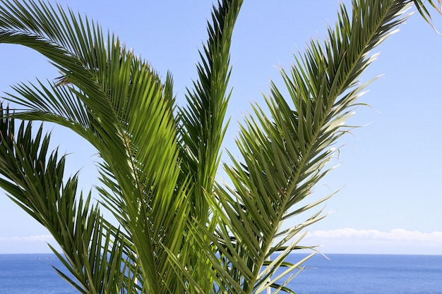 Palm tree close up with tropical sea and sky
