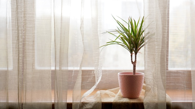 Palm tree in flowerpot on windowsill at home. sunny day