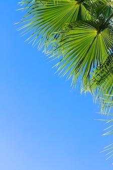Зеленые листья пальмы на фоне ярко-голубого неба с копией пространства