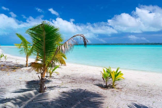 Palm tree growing up on idyllic beach