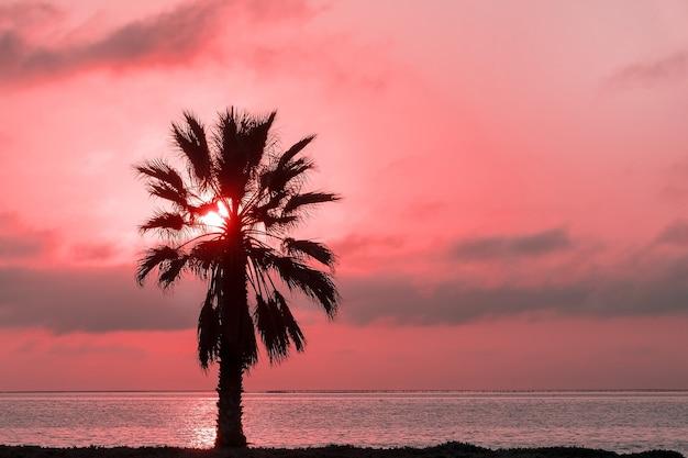 Пальма, тяжелые драматические облака и яркое небо. красивый африканский закат над лагуной.