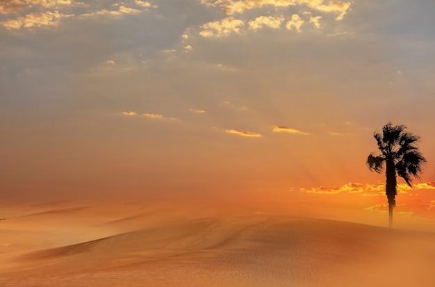 Пальма, тяжелые драматические облака и яркое небо. красивый африканский закат над песчаными дюнами