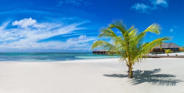 Пальма на мальдивах Premium Фотографии