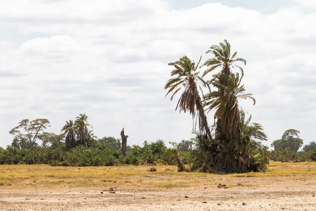 Пальма в саванне небольшой оазис в саванне амбосели кения Premium Фотографии