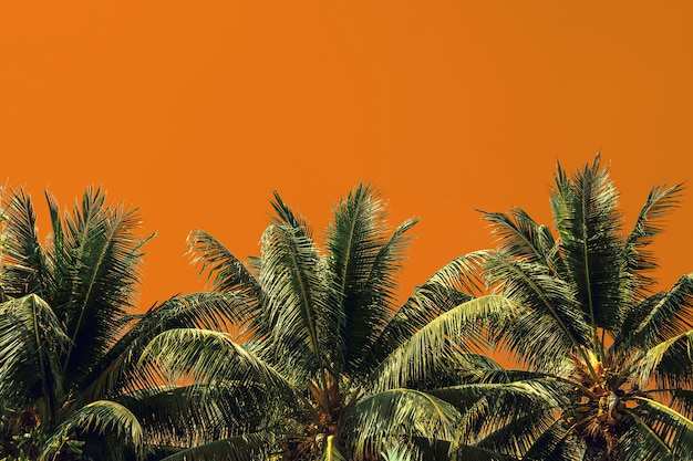 Palm tree isolated on yellow background