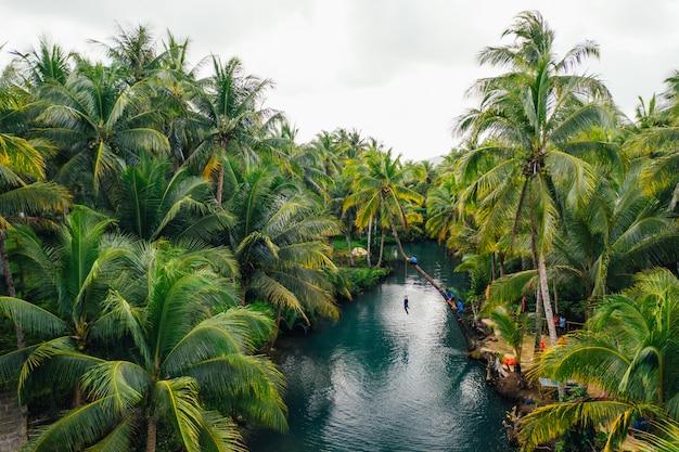 フィリピンのヤシの木のジャングル。放浪癖の熱帯旅行についての概念。川で揺れています。楽しい人