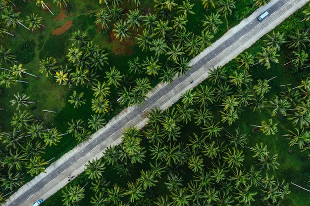フィリピンのヤシの木のジャングル。放浪癖の熱帯旅行についての概念。