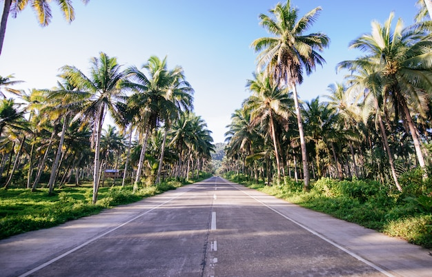 Palm tree jungle in the philippines. concept about wanderlust tropical travels