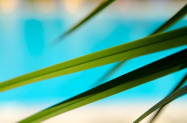 Palm tree leaf close up on blur blue pool water or beach background