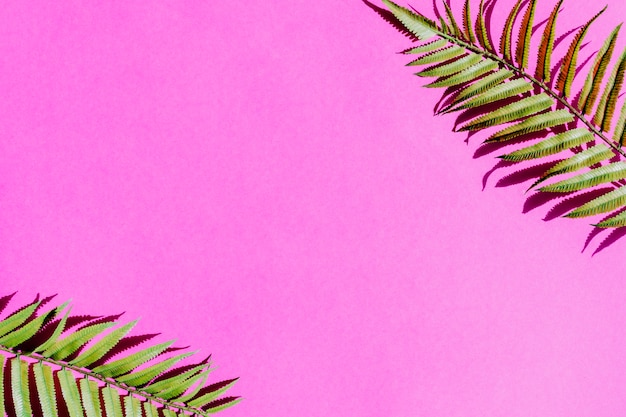 Palm tree leaf on colorful surface