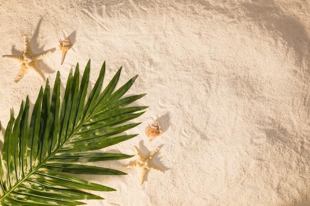 Palm tree leaf on sand