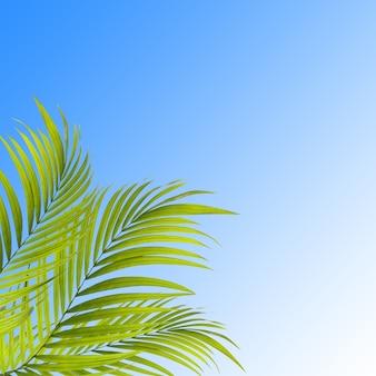 파란색 배경에 야자수 잎