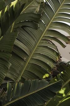 야자수 잎. 아름다운 여름 이국적인 열대 자연