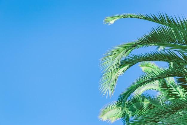 Palm tree leaves under blue sky.