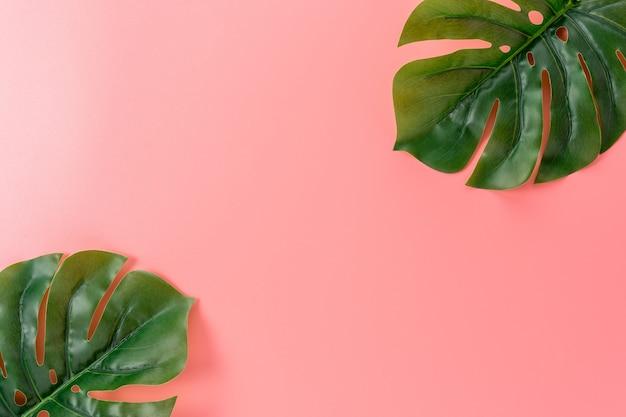 Листья пальмы на розовом