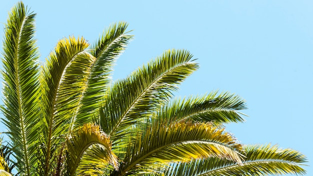 Palm tree leaves outdoors in the sun