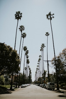 Palm tree lined boulevard in los angeles