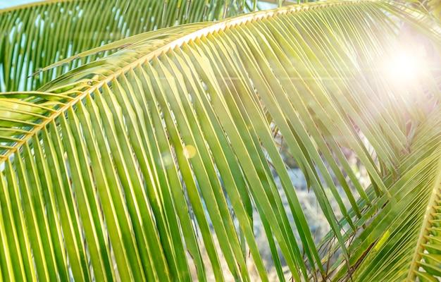 ヤシの木の自然の背景、太陽の光。高品質の写真