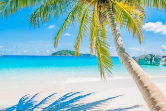 Palm tree on sandy beach