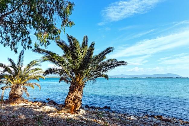 Пальма на летнем пляже лефкас, греция