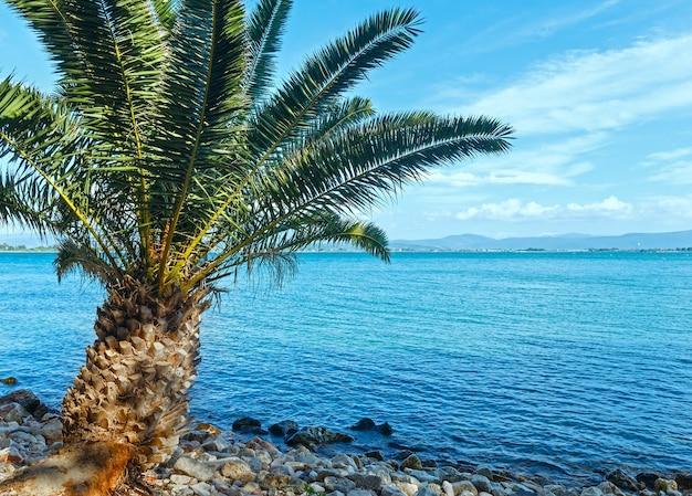 Пальма на каменистом пляже летом лефкас, греция