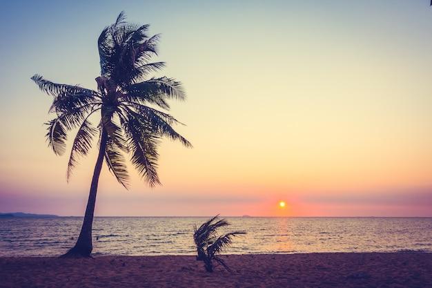 ビーチのヤシの木