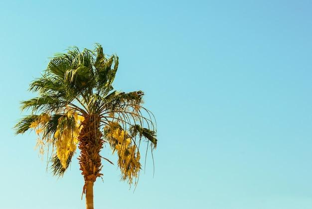 青空の背景にヤシの木