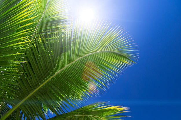 Пальма на небе