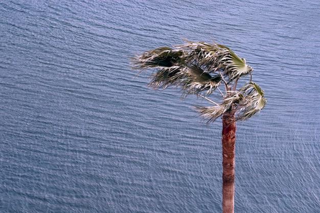 強風で波打つ海の上のヤシの木
