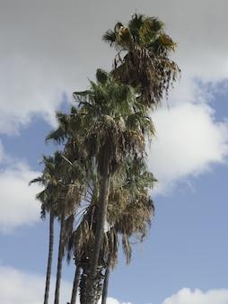 上空のヤシの木