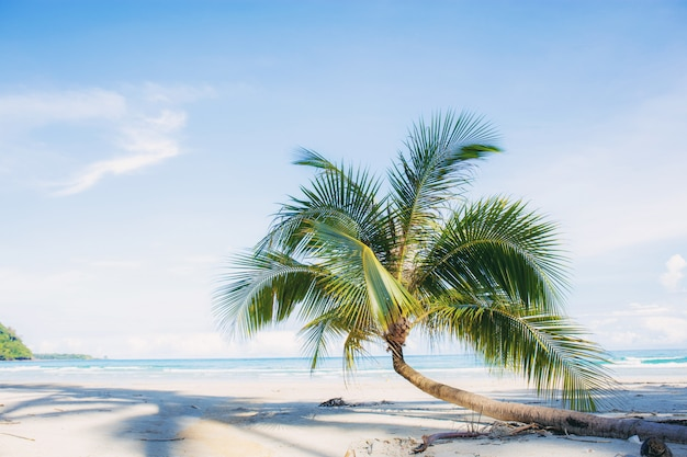 Palm tree on sand beach.